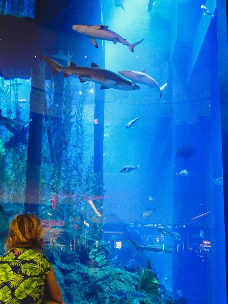 Dubai aquarium kinderen
