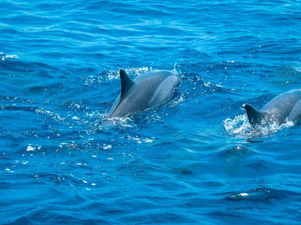 Dolfijnen Malediven met kinderen