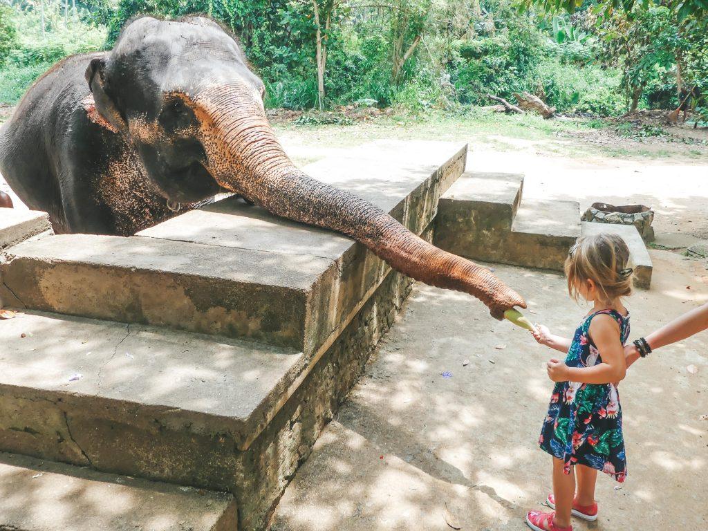 Olifanten Sri Lanka met gezin en kind