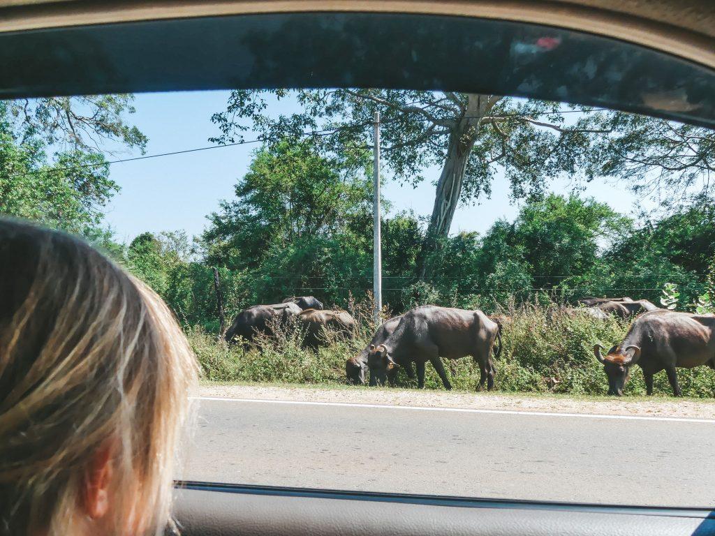 Safari Sri Lanka met gezin