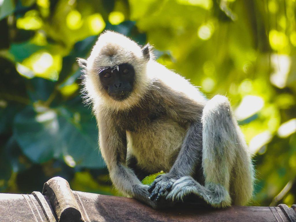 Sri Lanka met kinderen aap
