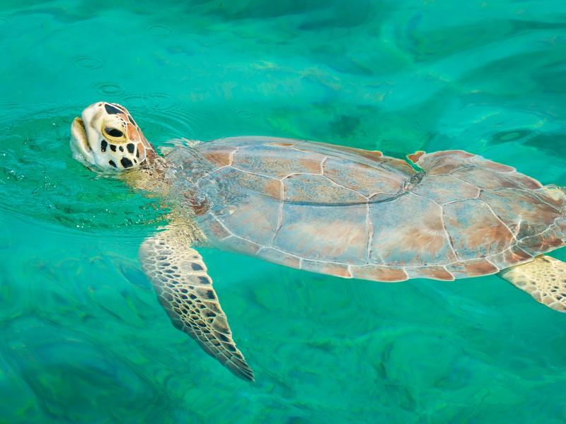 Bahamas onderwaterwereld snorkelen