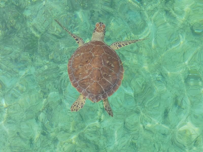 Bahamas schildpad snorkelen