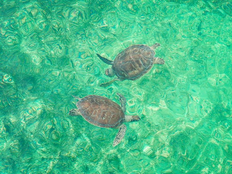 Bahamas vakantie snorkelen met kinderen