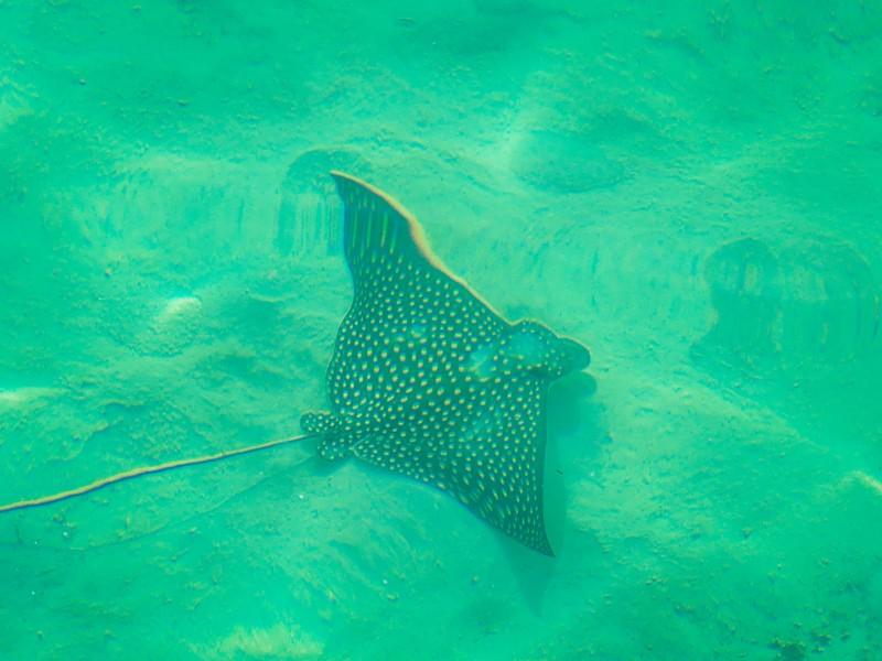 Snorkelen bahamas vakantie