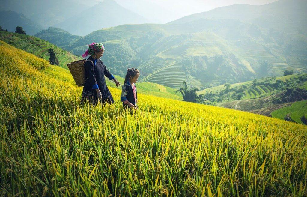 Vietnam reis met gezin goedkoop