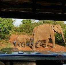 Safari Sri Lanka met kinderen
